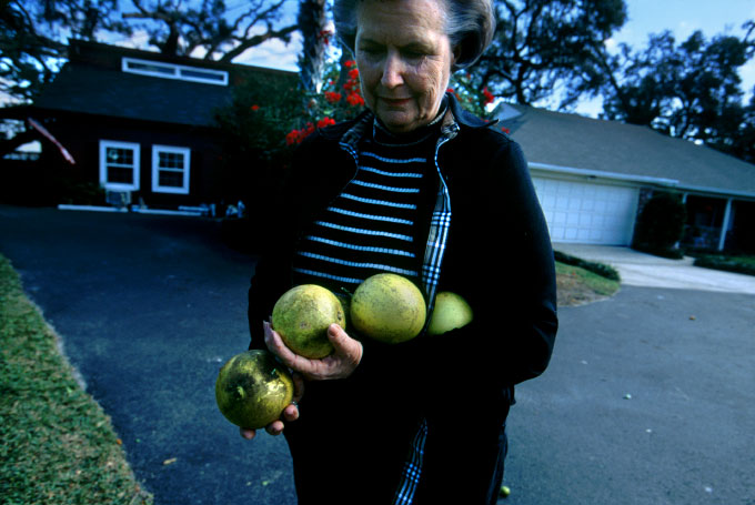 Former Orange County Mayor Linda Chapin collects the last oranges from a rotten grove that had to be culled from her front yard.