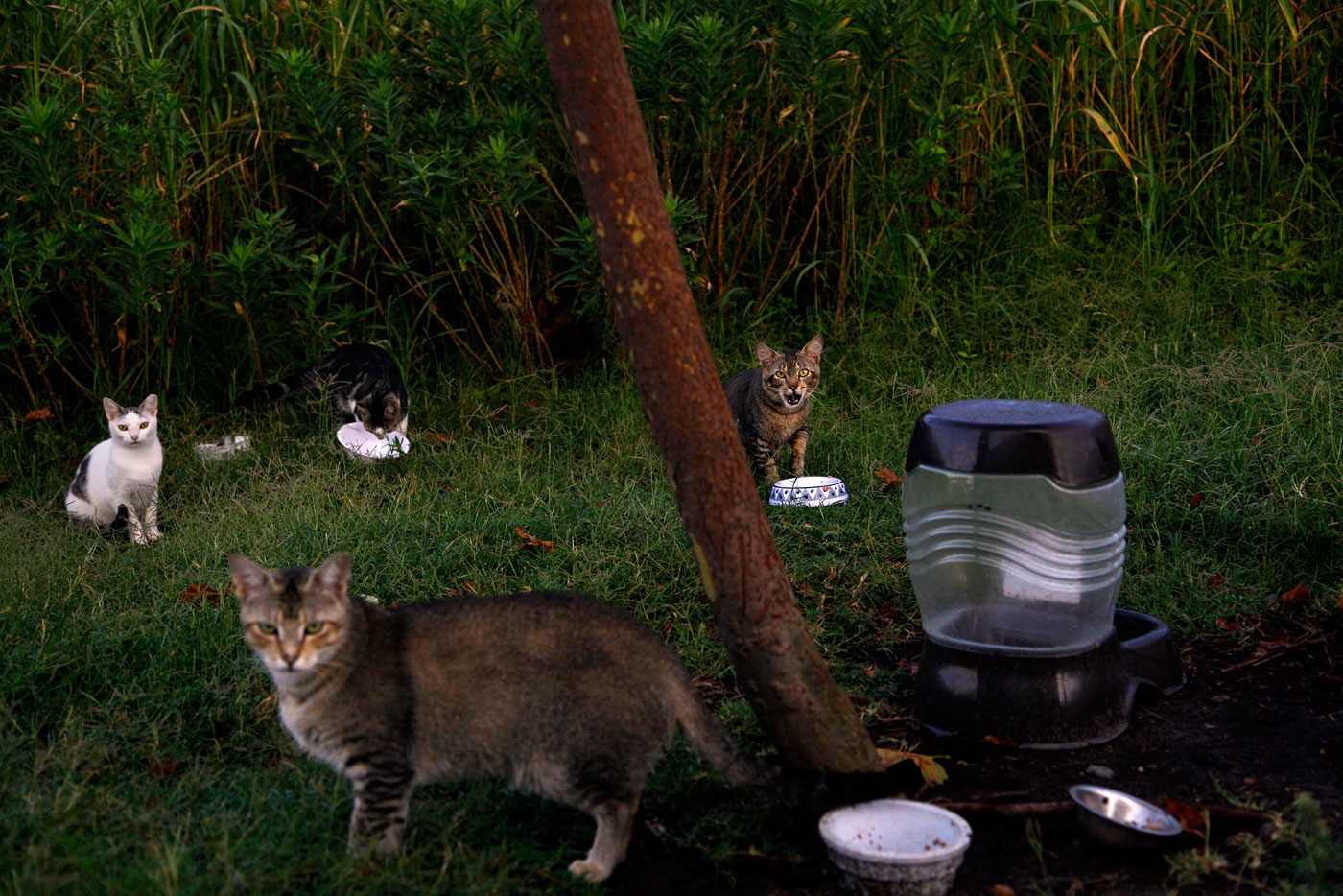 About a dozen feral cats live outside of McAllister Towing in Norfolk, Va., on Friday, July 13, 2012. Employee Michelle Edwards feeds them and recently had them neutered or spayed through a trap and release program.