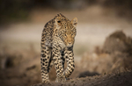 BrianHampton_Wildlife_NaturesBestApril2014_6574