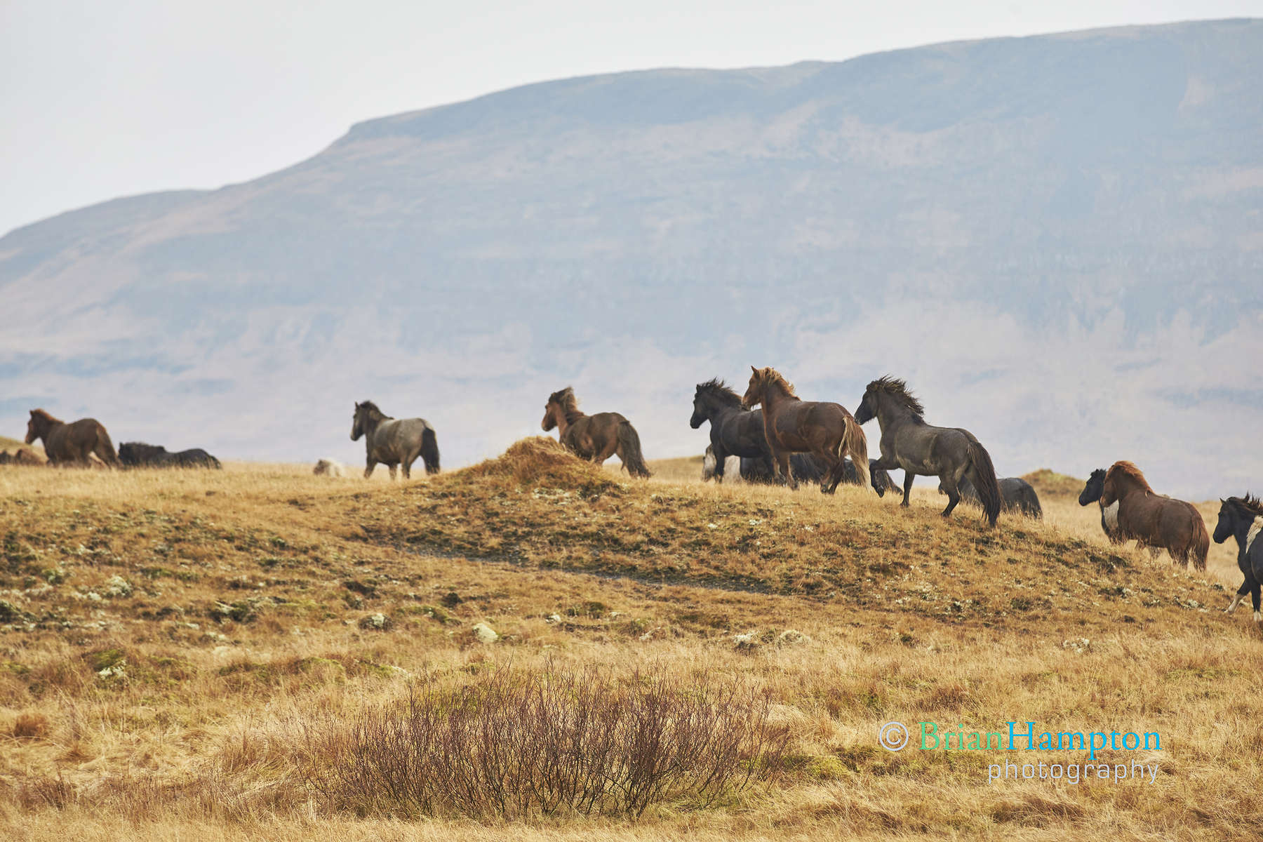 Horses-on-the-hill_0485