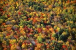 Mixed Hardwood Forest in AutumnUpstate New YorkFilm, Ref #: LS_5528_26