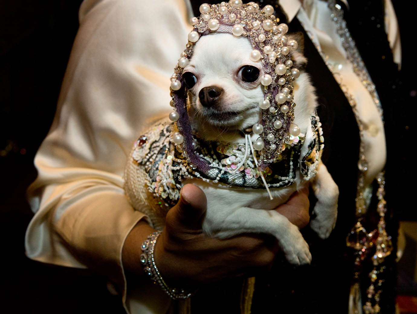 At Roaring Twenties Pet Fashion Show by Tropiclean