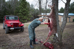 Dr. Pol Gutting Deer - Road Kill