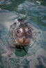 Action, Harbor Seal
