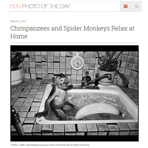 PDN Photo of the Day Chimpanzees and Spiders Monkeys Relax at Home
