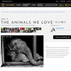 Published Story: The Animals We Love