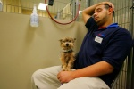PetSmart chain stores have PetsHotel services catering to pets whose parents must leave town without them.