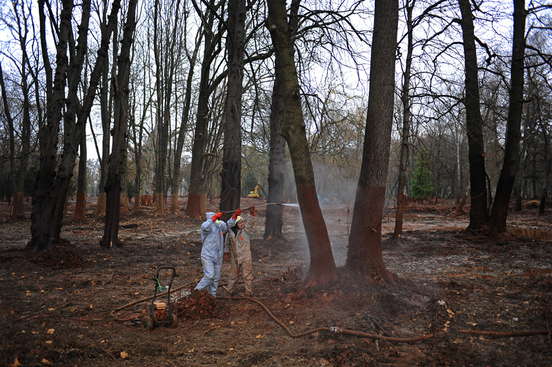 DEVECSER, HUNGARY.  Clean up crews work to hose down contaminated trees in the castle park that schoolchildren used to play in on November 20, 2010 in the aftermath of a toxic industrial accident on October 4, 2010 that resulted from a rupture in a reservoir containing toxic alumina sludge in nearby Ajka, Hungary that sent hazardous red sludge gushing through Devecser and several surrounding towns, killing ten, injuring hundreds and leaving several families homeless.