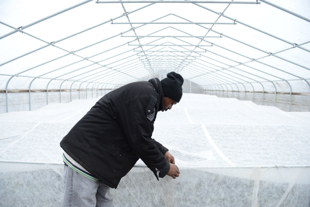 CHICAGO, ILLINOIS.  Fred Daniels, 31, the site manager of Growing Home, a community-based agriculture project, adjusts the row cover inside one of the facility's hoop houses where a range of root and leaf vegetables are grown in the high crime Englewood neighborhood on December 22, 2014.  Englewood is one of the neighborhoods most hard hit by violent crime year after year in Chicago but has not avoided the healthier food fashion, with the national organic grocery retail chain Whole Foods announcing that it will be opening a store in the neighborhood at 61st Street and Halsted.