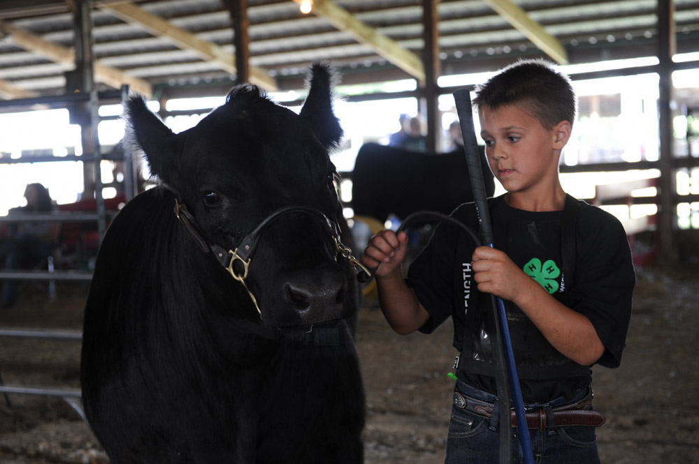 URBANA, ILLINOIS.  Alex Warner, 10, of Rantoul, Illinois waits to show his angus cow {quote}Little Rascal{quote} at the Champaign County Fair on July 30, 2015.  Summer is county fair season and in Illinois, that means food, 4H, and the midway; Warner's angus cow placed first in the lightweight class of angus cow.