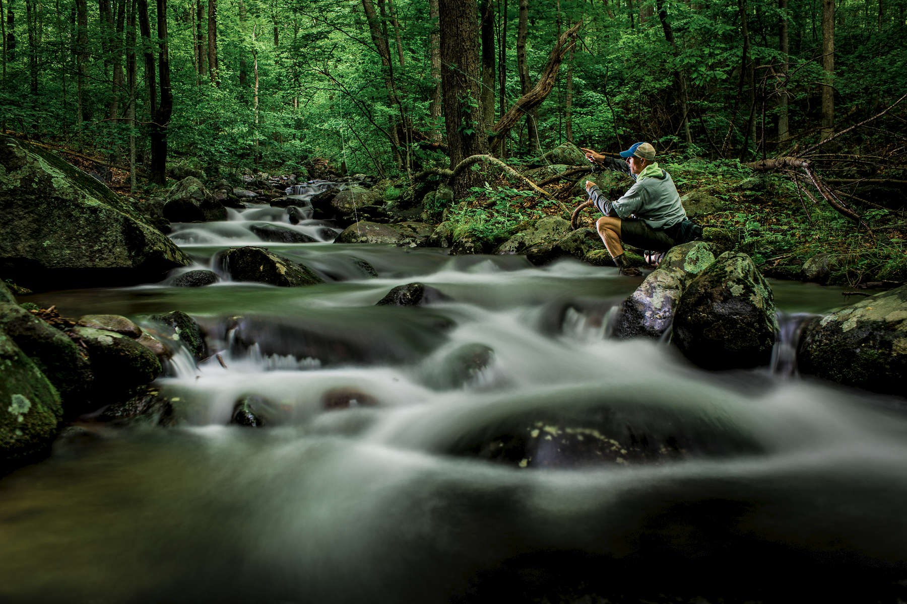 Fly fishing for Brook and rainbow trout in Blue Ridge Mountains of Virginia.