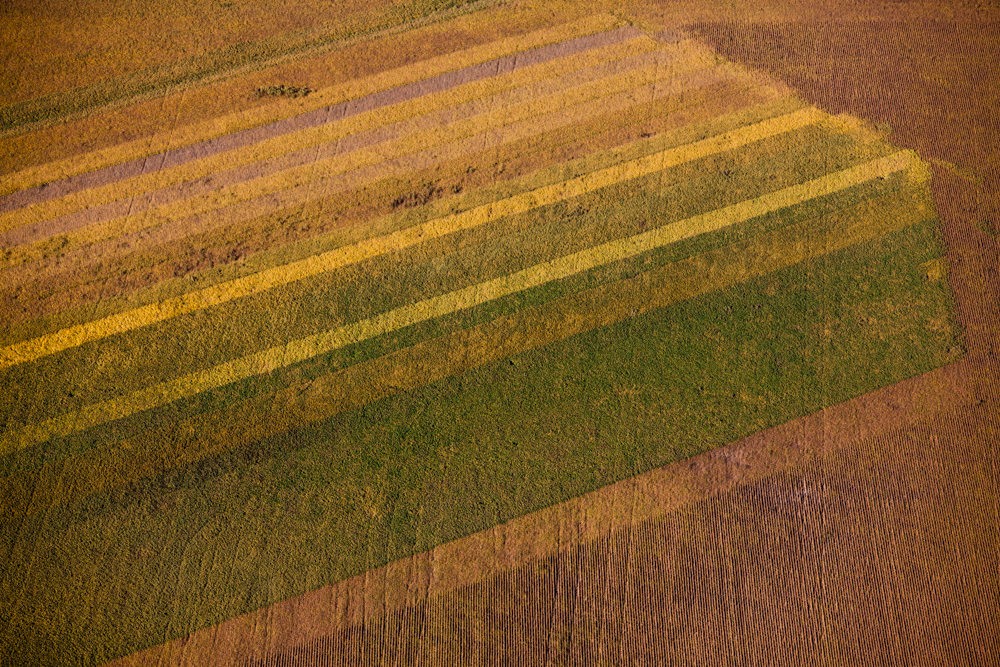 Crop TonesPapillion, NE 2011From the series Growing.Digital Capture, Ref #: 110930-0062