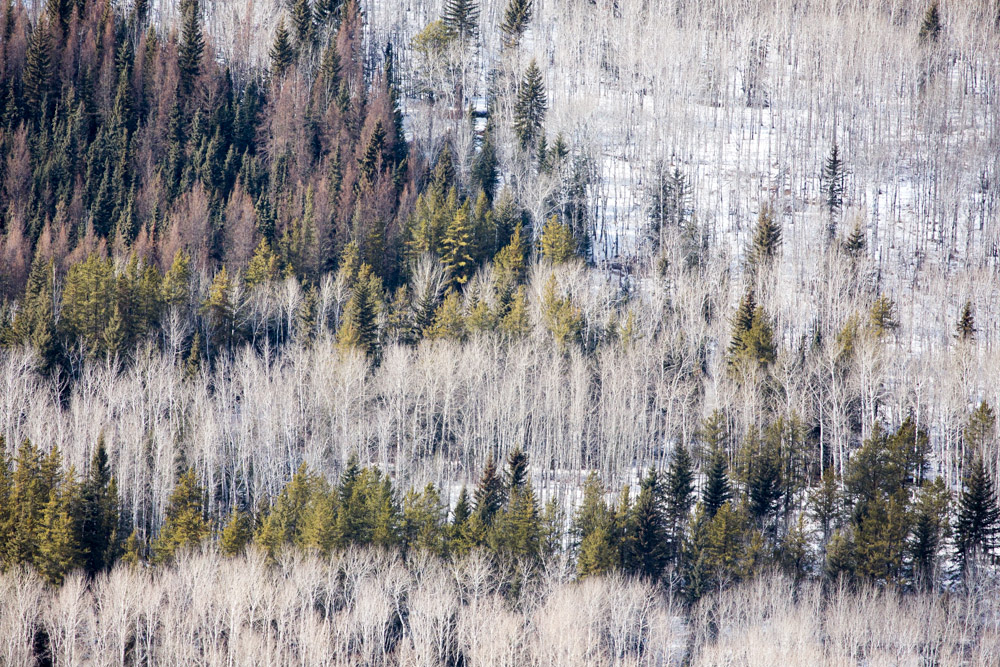 Variation in the Boreal Forest, Alberta, Canada 2014File Ref. #140404-0094