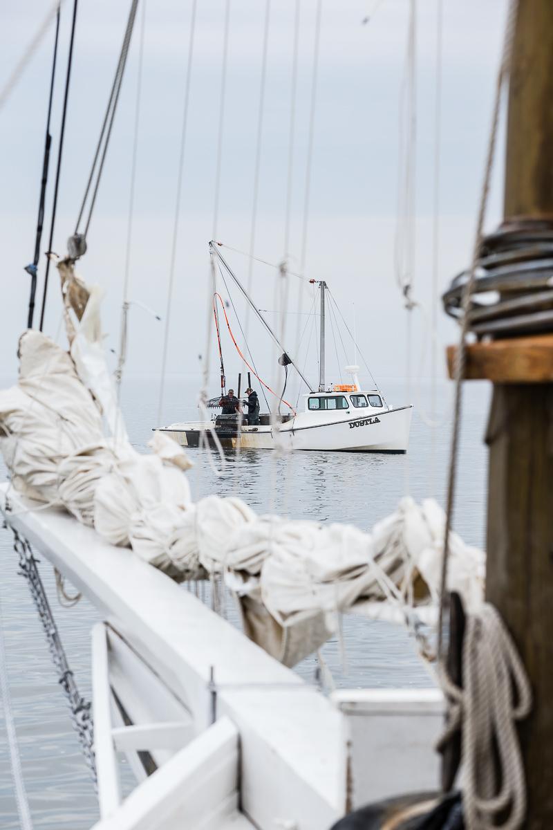 Patent tonger working near the skipjack Fannie L. Daugherty near Deal Island, Chesapeake Bay.