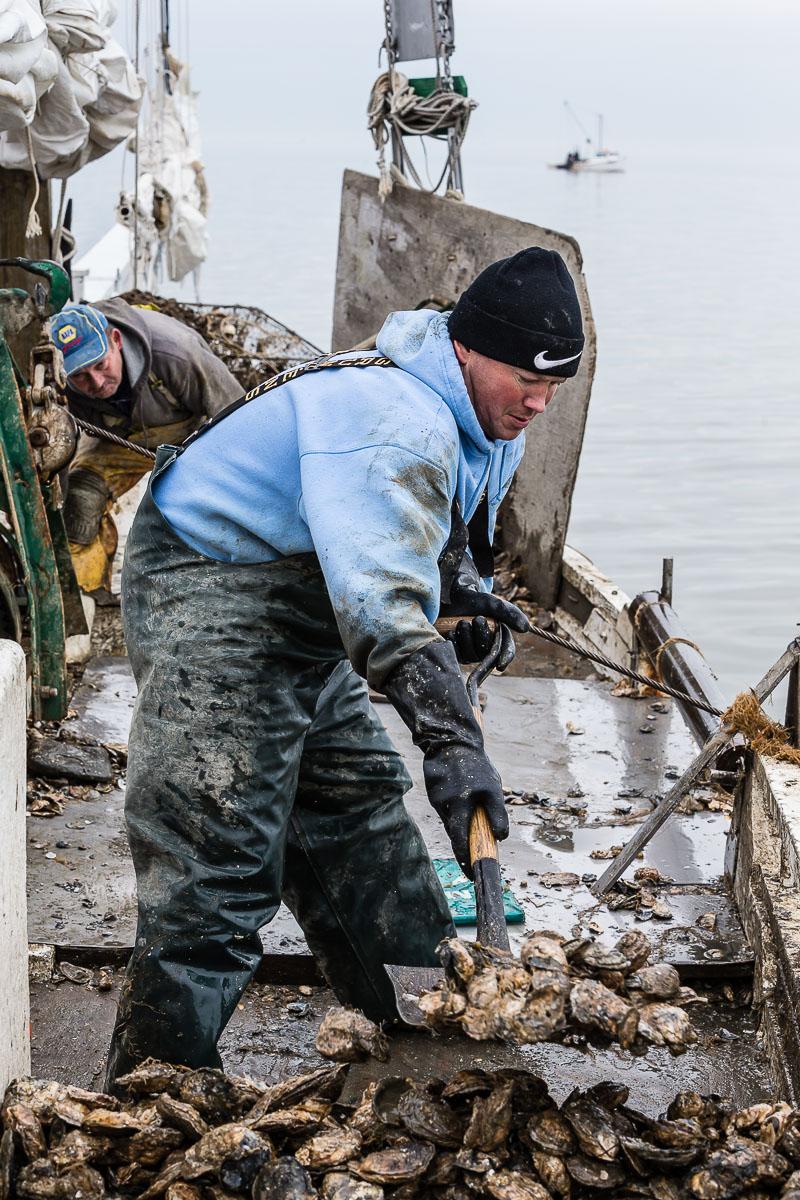 Jason Daniels stacks oysters on the skipjack Fannie L. Daugherty near Deal Island, Chesapeake Bay.