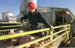 A pig farmer in Indiana