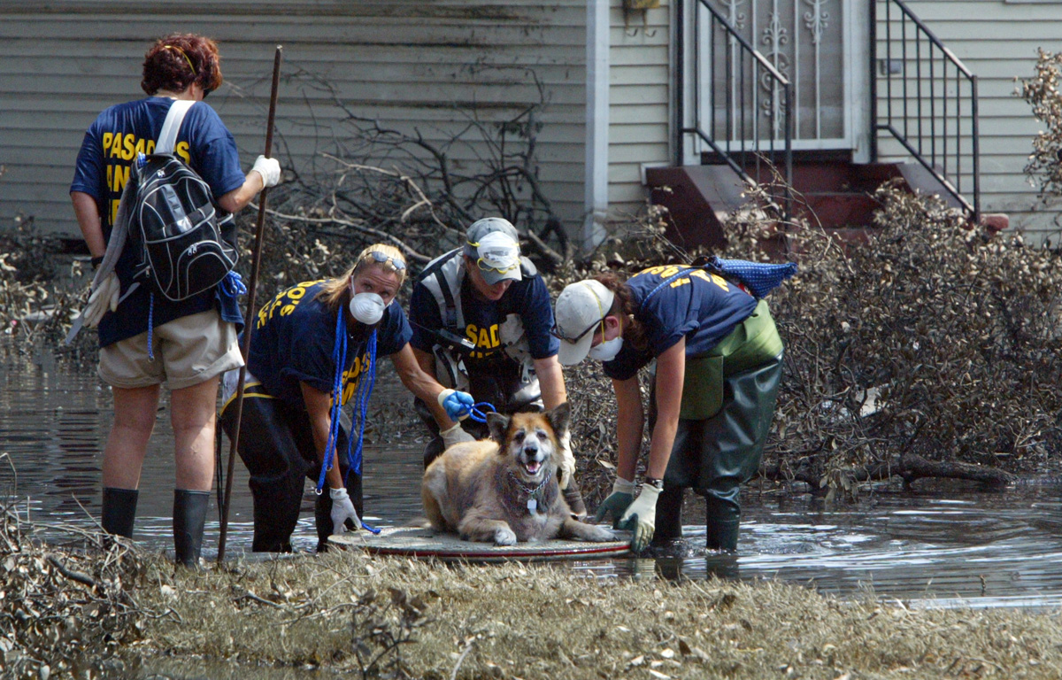 A dog is rescued and floated down Banks St on a makeshift raft by volunteers from Pasadsos Safe Haven.  © Karen Ducey