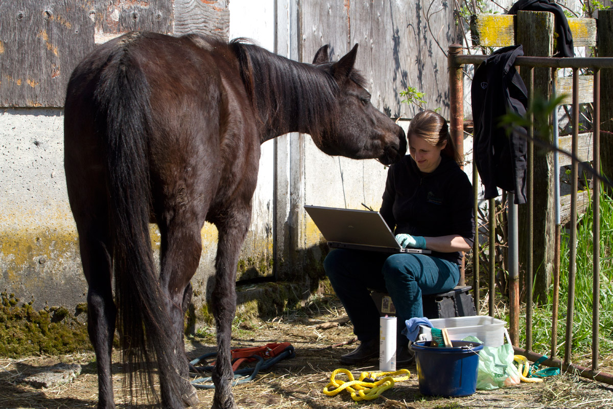 Hannah Mueller, DVM, co-founder and vice president of the Northwest Equine Stewardship Center and practice owner of Cedarbrook Veterinary Care creates records of horses on Summer Raffo's farm in Oso, Wash. during a voluntary veterinary visit on April 1, 2014. The 16 horses belong to Summer Raffo, who died in the Oso mudslide on March 22, 2014. Along with help from another vet and volunteers the horses received basic vet care, grooming and were fed fresh hay.