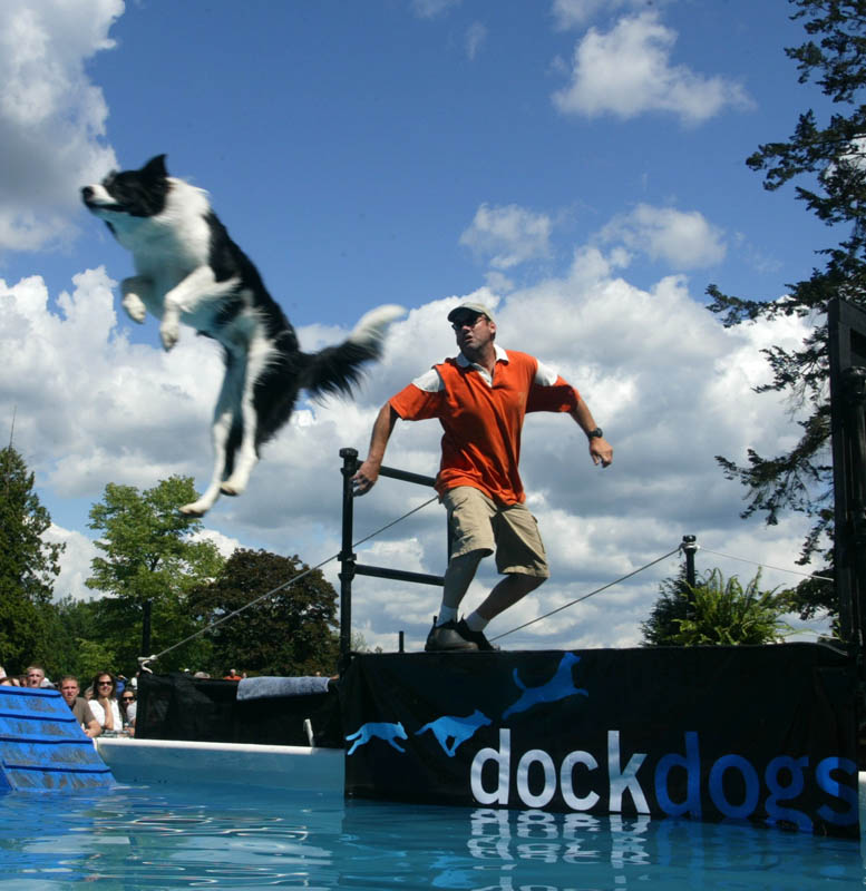 A border Collie flies through the air after a frisbee at a Dock Dogs competition