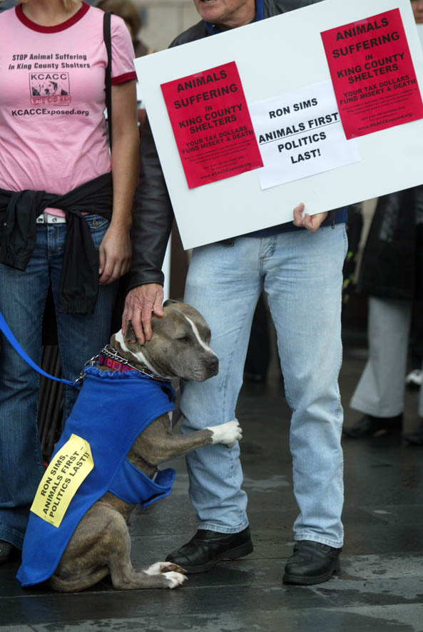 A pit bull clings to his owner during a demonstartion outside Seattle City Hall.