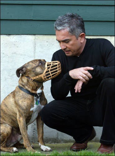 Cesar Milan meets with an aggressive pit bull who had been abused by its former owner.