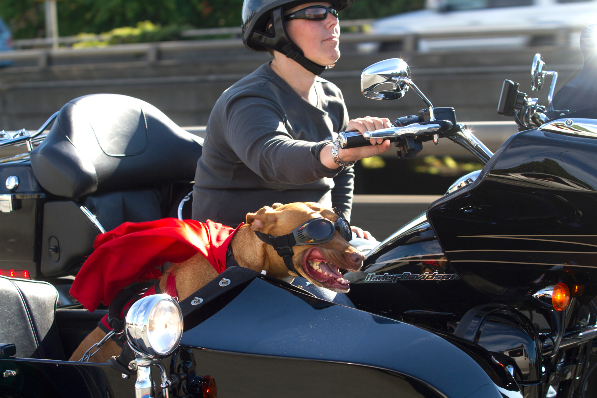 pitbull-ducey-motorcycle-lucy-PS