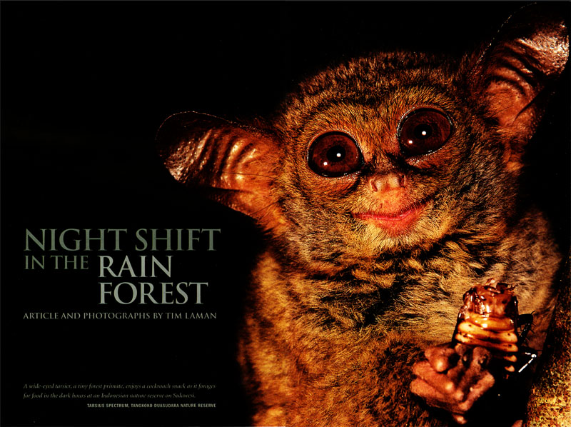 -- This story Tim wrote and photographed is about nocturnal wildlife in the rain forest of Southeast Asia.