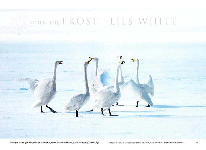 Japan's Winter Wildlife story-- Check out the video, audio, and multimedia presentation for more information about When the Frost Lies White.-- See Japan's Winter Wildlife gallery under the PHOTO GALLERIES menu.