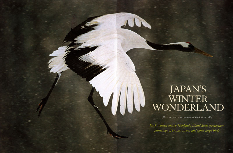 -- Tim wrote and photogaphed this feature story on winter gatherings of birds on Japan's Hokkaido Island.-- Read the full text and see the images at the National Wildlife web site.
