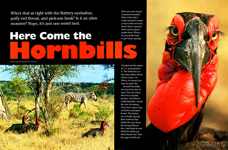 --  Tim wrote and photographed this story on African ground hornbills.