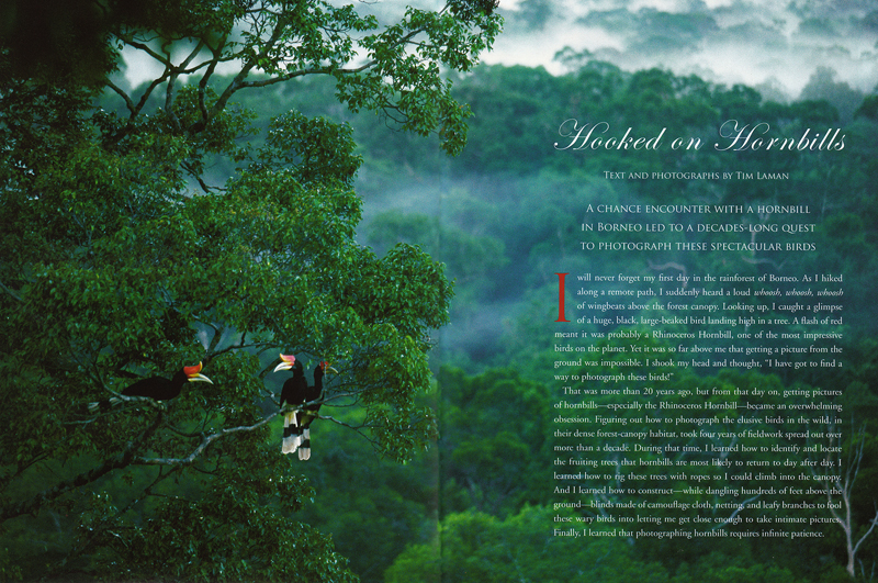 --  Tim wrote and photographed this story on Hornbills for Cornell's Lab of Ornithology's magazine.--  View Hornbill Images