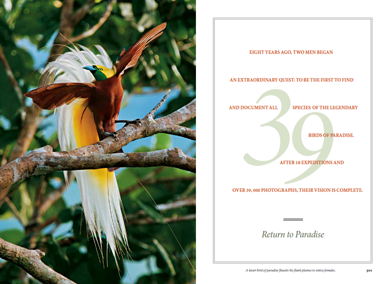 --  This is Tim's second National Geograhpic article on Birds of Paradise.  View Tim's new work on our archive.--  You can read the article at the NGM website.