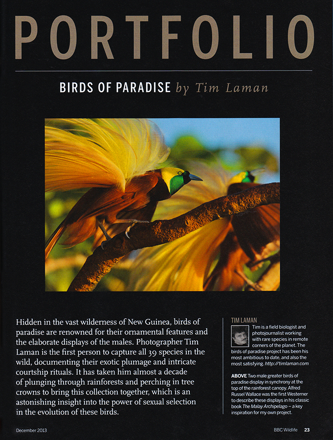 --  The magazines Portfolio section features Tim's Birds of Paradise work in 13 pages with 12 stunning images.  See Tim's gallery Birds of Paradise for additional photos.