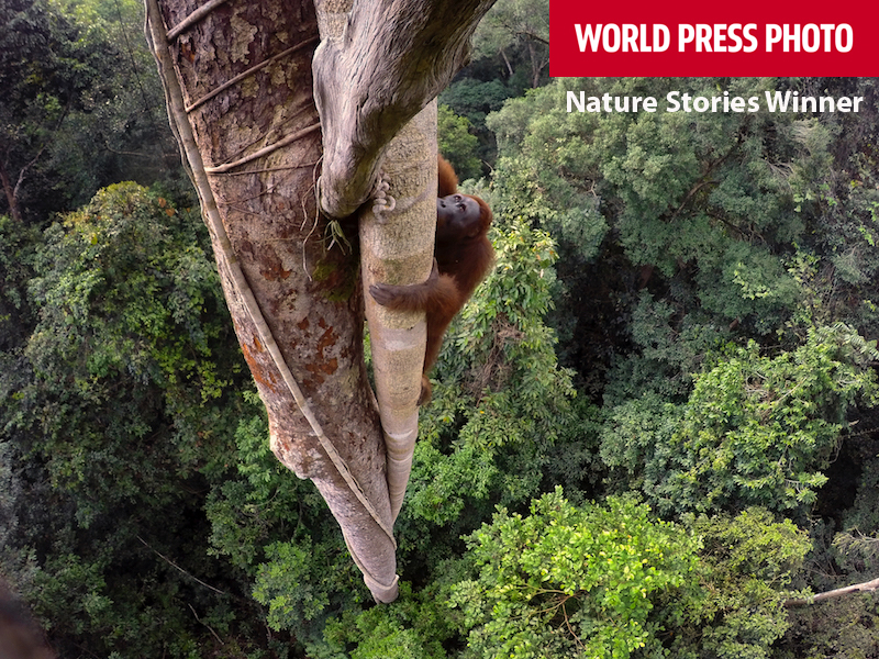1st place winner of the Nature Stories catageory at World Press Photo.