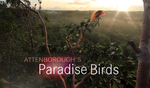 Attenborough's Paradise Birds TrailerTim and his Birds of Paradise Project are featured in the film.