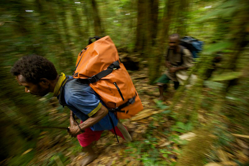 Porters carry expedition gear to our high camp in the Arfak Mountains of Indonesian New Guinea.