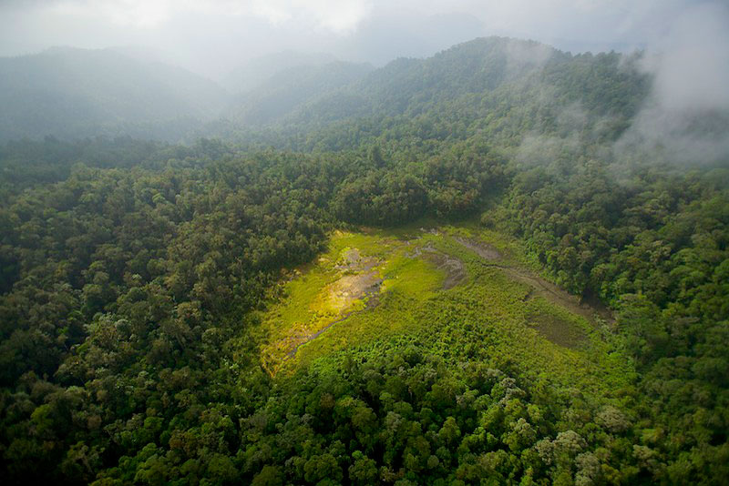 This bog is a natural clearing in the rainforest of the Foja Mountains.  It was used as the landing site and where one of the camps was set up.