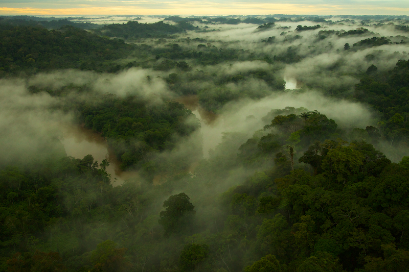 Aerial view of morning mist above the Tiputini River in Yasuni National Park, Francisco de Orellana Province, Ecuador.