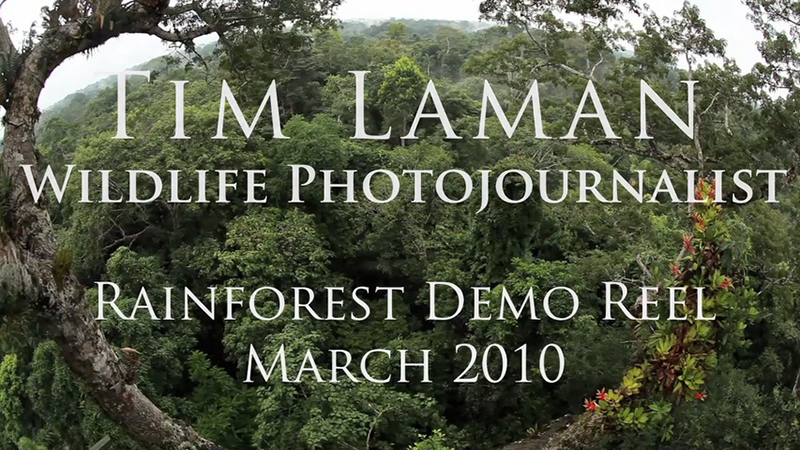 Tim is now shooting video regularly on his Canon 1D-C and 5D MkIII cameras to complement his photo assignments.  Check out this demo reel to see a sampling of video shot during various rain forest assignments in 2009 and 2010.