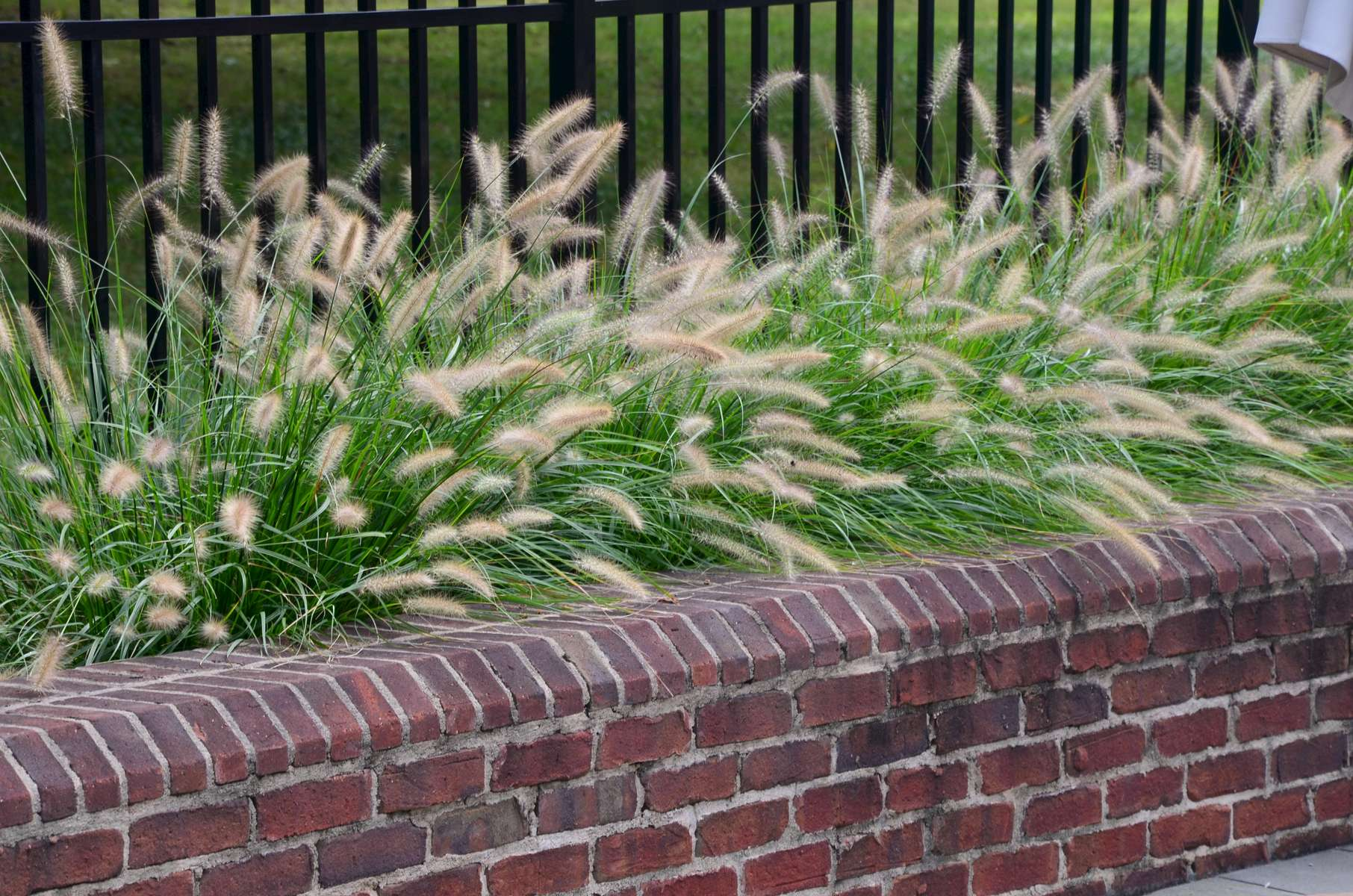Ornamental grasses add seasonal drama and soften the lines of the raised brick beds within the pool surround.