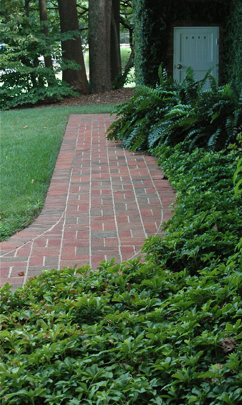 At the back of the house sits a brick walkway adorned with a Holly fern and Pachysandra surround.