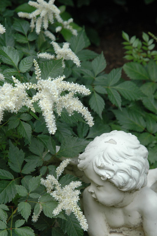 A bashful cherub overlooks white Astilbe as time seems to stand still in this peaceful garden overture.