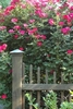 South-Charlotte-exquisite-landscape-design
