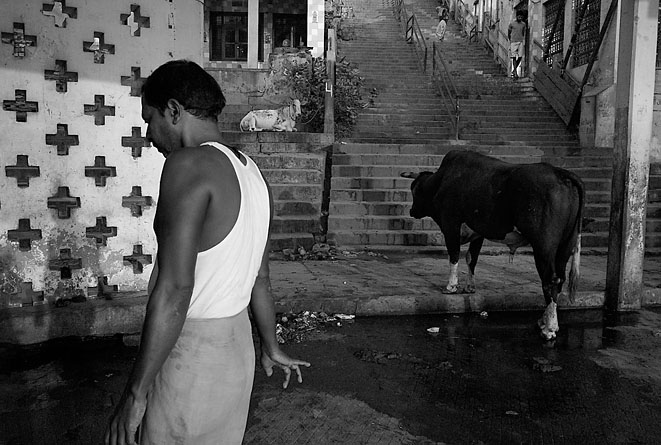 Man_and_cow_8