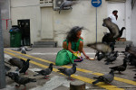 Woman feeding pigeons in Little India.
