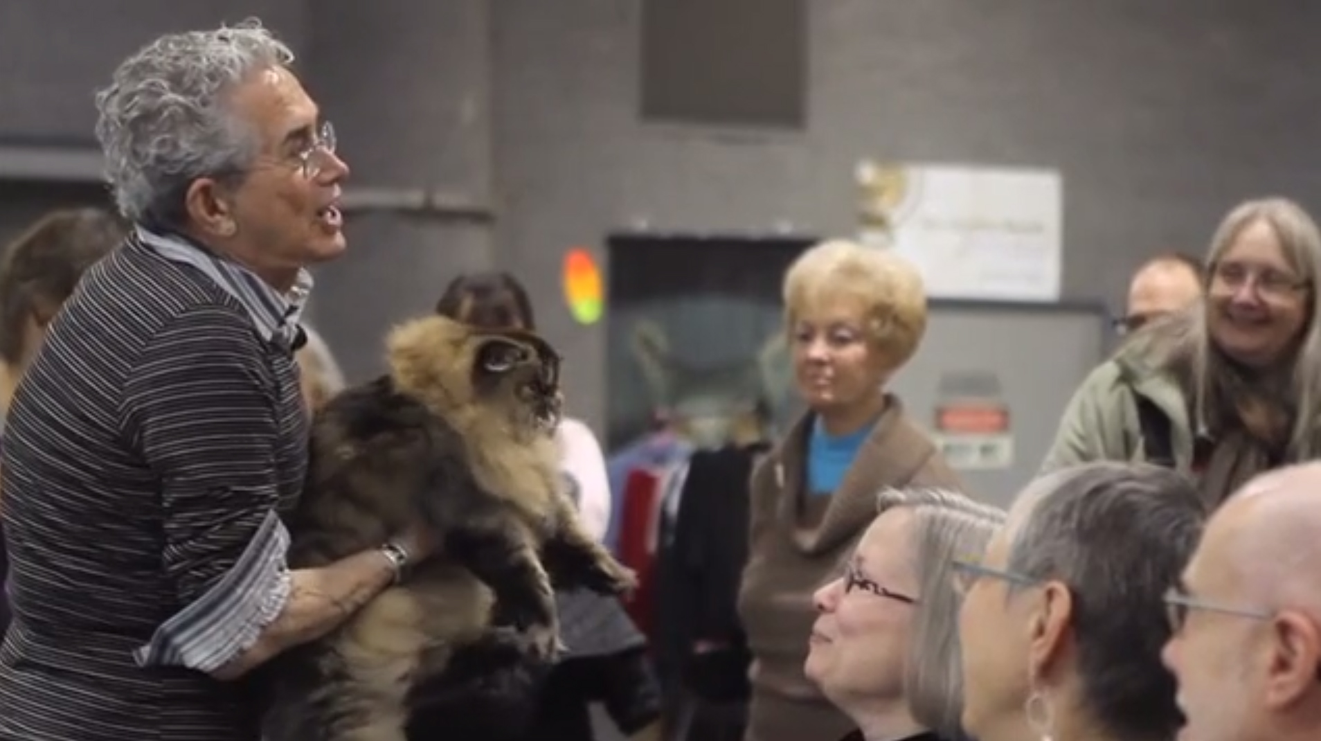 New York native Walter Hutzler has more than 40 years of experience judging cat shows, and he brings his expertise to the Saintly City Cat Club's Annual Championship & Household Pet Cat Show in St. Paul.