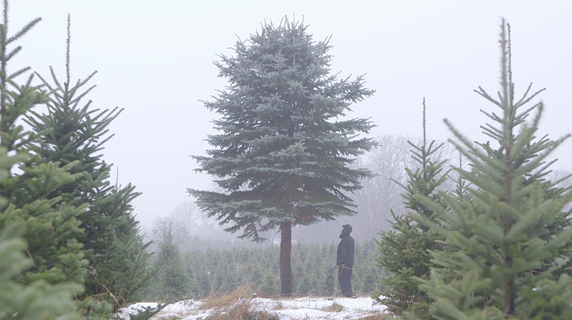 Minnesota Public Radio's Tim Post shows us that selecting the right tree for the Christmas holiday takes dressing properly for the winter elements, having the right tool for the job and knowing what type of tree is the best fit for each home.