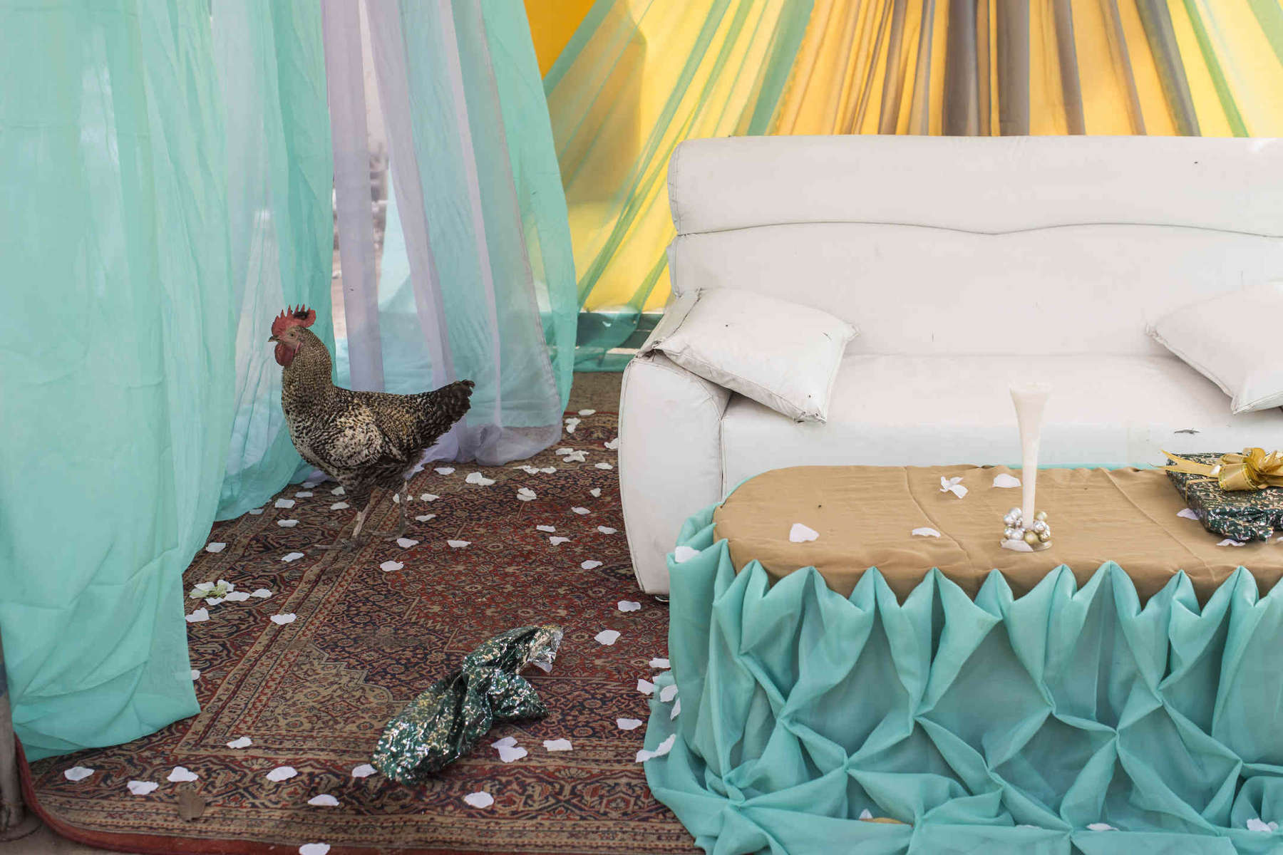 A chicken runs through the bridal tent in Yaba, a working class neighborhood in Lagos, Nigeria.