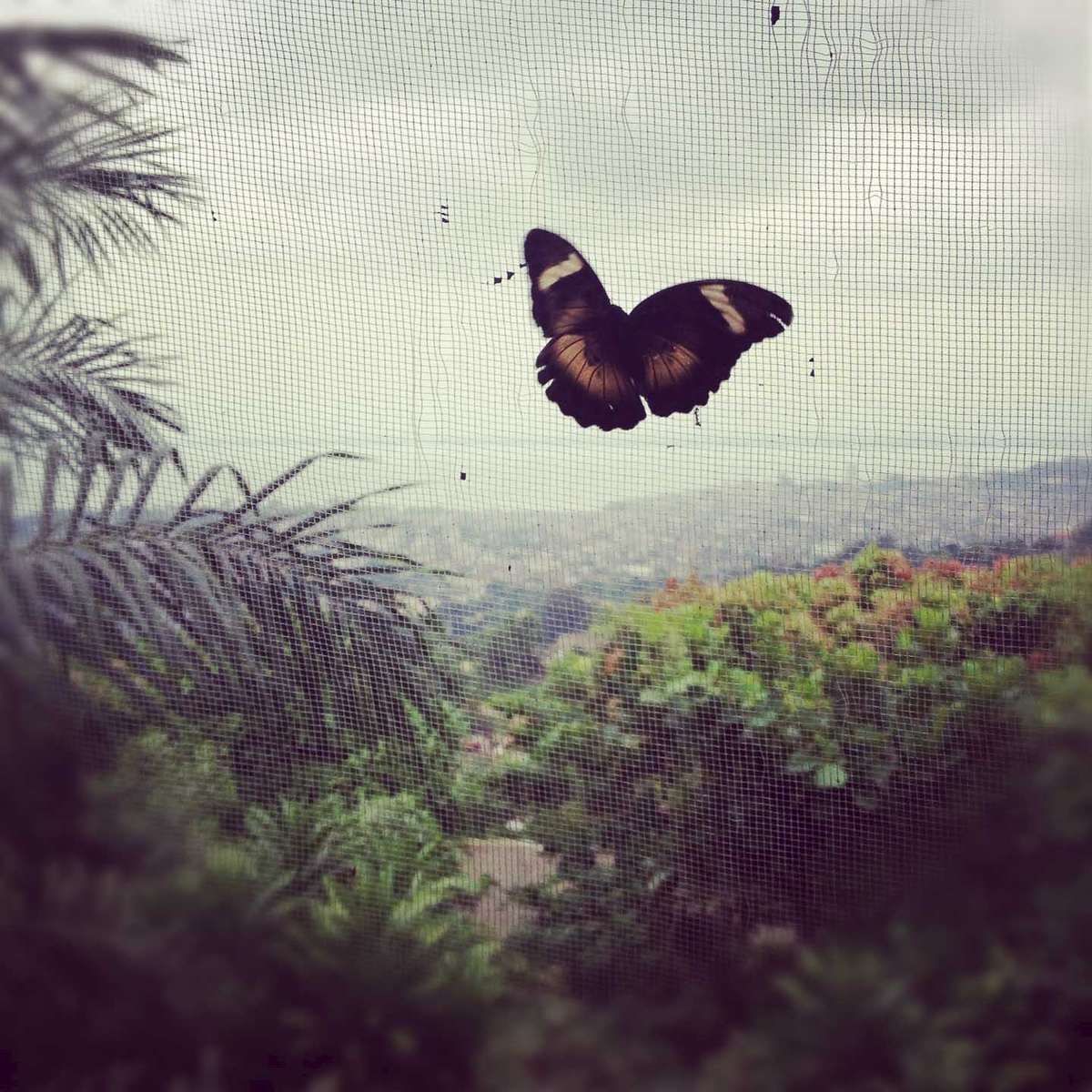 A butterfly on Signal Hill, looking out over Freetown, Sierra Leone. November 2012.