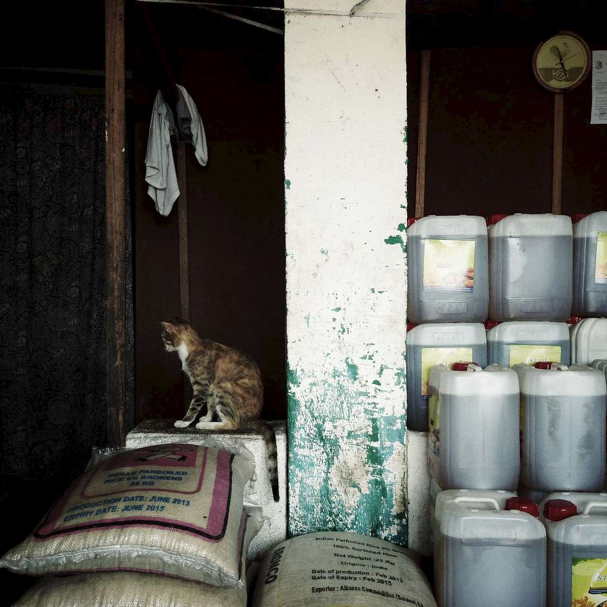 Cat on a ledge. Monrovia, Liberia. January 2013.